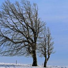 30-31 января в Беларуси объявлен оранжевый уровень опасности