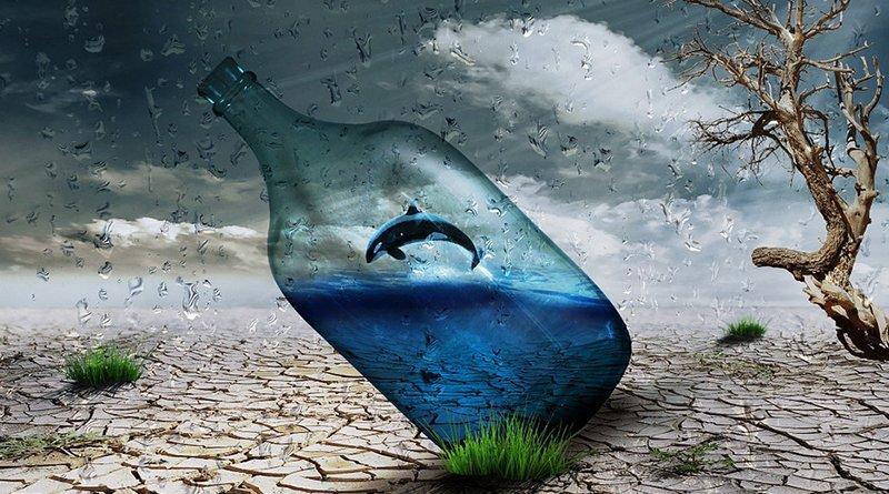 Петиция против передвижных дельфинариев