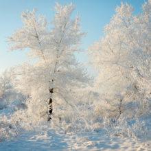 Погода в Беларуси: на следующей неделе ожидается до -9°C