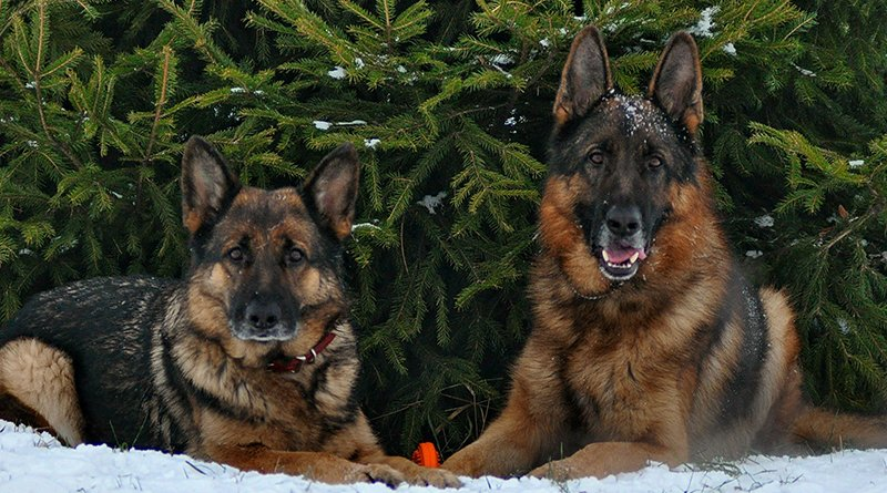 Собаки против выбрасывания елки