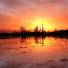 Гомельская область страдает от паводков