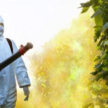 Определена доля содержания пестицидов в овощах и фруктах