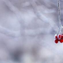 Как белорусы переживают сильные морозы