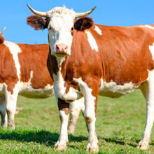 Беларусь и России идут к созданию единого молочного рынка