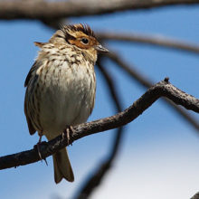 В Беларуси зарегистрировано три новых вида птиц