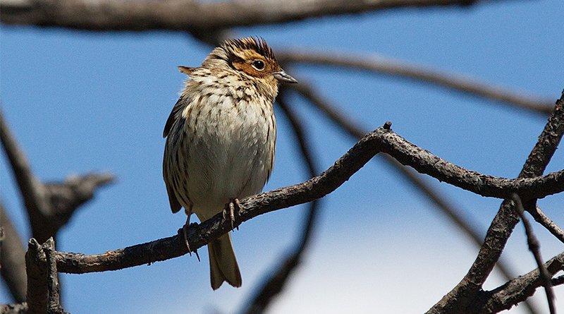 три новых вида птиц