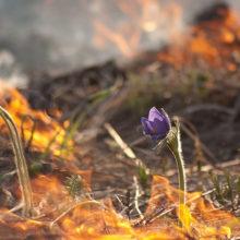 За прошедшие сутки ликвидирован 121 пожар в экосистемах Беларуси