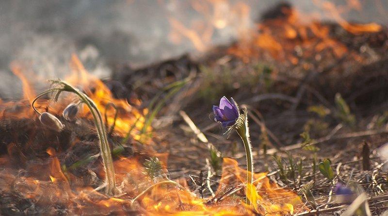 пожар в экосистемах Беларуси
