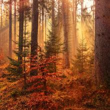 Новый министр лесного хозяйства рассказал о коррупции