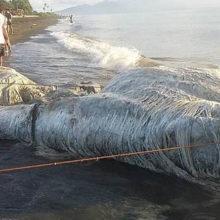 Гигантского волосатого монстра выбросило на берег — местные жители ожидают беды