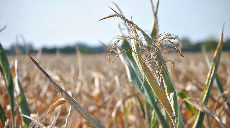 58.000 га сельхозкультур