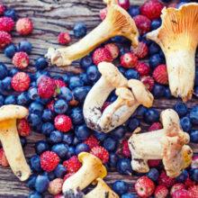 Белкоопсоюз рассказал о закупочных ценах на сельхозпродукцию, грибы и ягоды