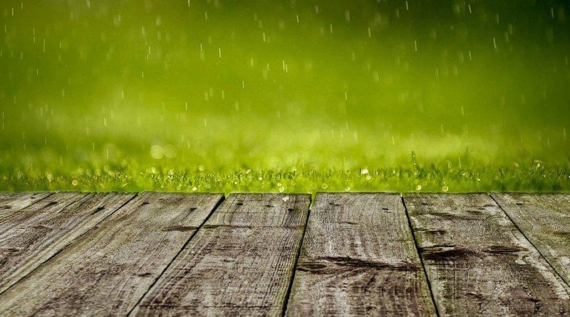 Погода в Гомеле