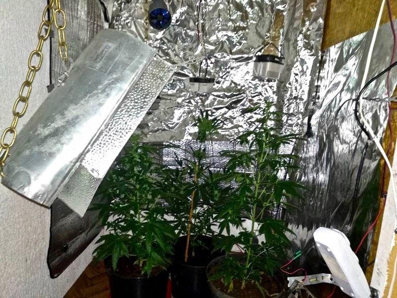 помещение для выращивания конопли