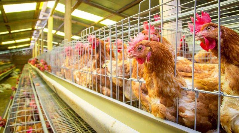 мясокомбинаты и птицефабрики