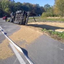 ДТП на «Хойникском перекрёстке»: перевернулся большегруз с зерном