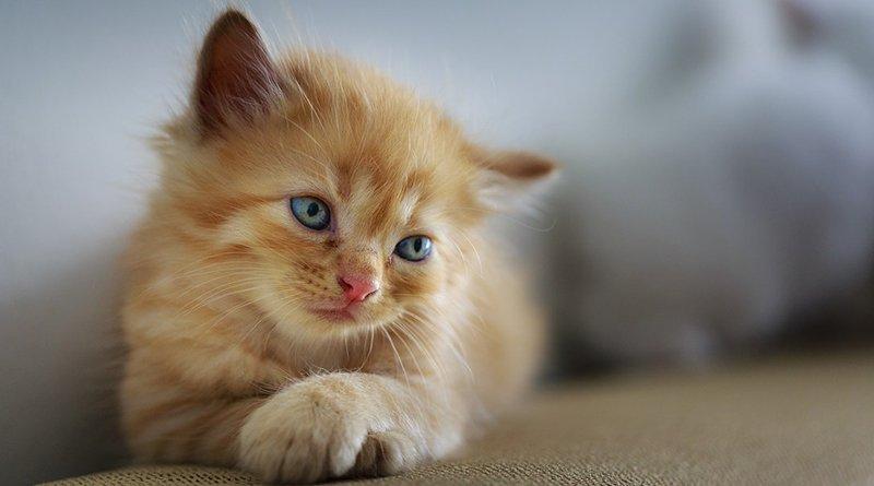 пара утопила котенка