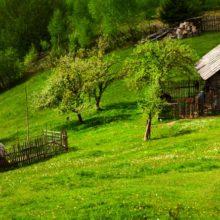 National Geographic признал Беларусь лучшей страной для агротуризма