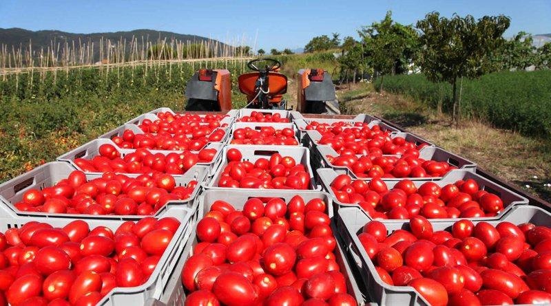Парень похитил две тонны помидоров в Азделино