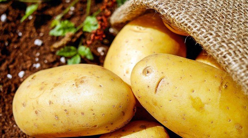 картофельный вор