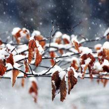 Какой будет погода в Гомеле в выходные 17-18 ноября
