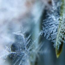 Пасмурно и снежно: погода в Гомеле в первые дни зимы