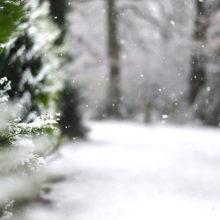 Погода в Гомеле: выходные будут пасмурными и снежными