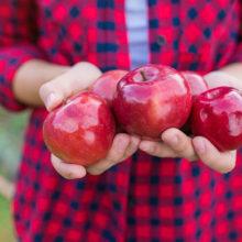Сельчанка под Гомелем собрала второй урожай яблок