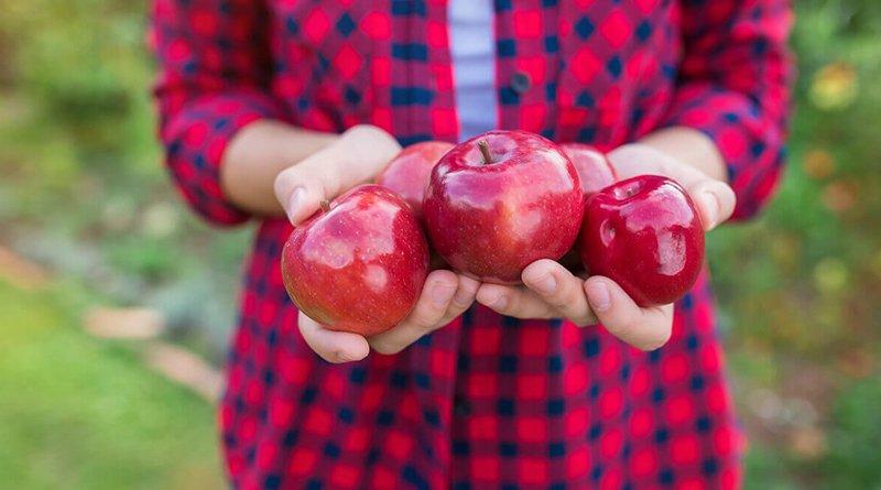 второй урожай яблок