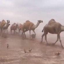 В Саудовской Аравии затопило пустыню