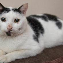 В Великобритании кот вернулся спустя 3 года после «гибели»