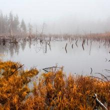 В Беларуси усилят охрану болот