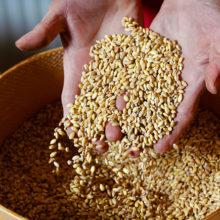 Беларусь и Россия обеспечат зерном страны СНГ