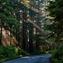 Более 90% лесного фонда Гомельской области находится под видеонаблюдением
