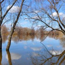 Гомельская область готовится к приходу «большой воды»