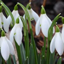 Когда на Гомельщине ожидать настоящую весну?
