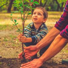 Парк семейных деревьев заложат в Гомеле не менее чем на 5 га