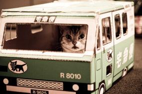 По Добрушу в рейсовом автобусе путешествует кот-безбилетник