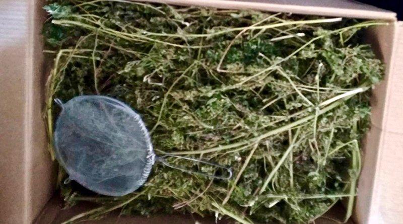 11 килограмм марихуаны
