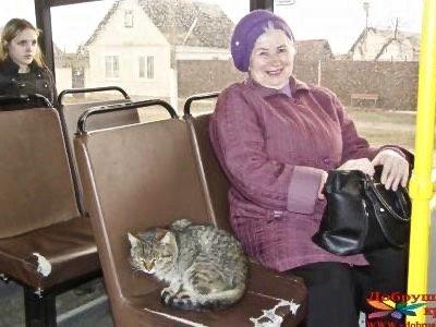 кот-безбилетник