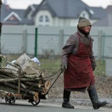 Белорусы смогут бесплатно собирать палки и ветки в лесу