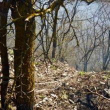 Под Жлобином в куче мусора нашли обгоревшее тело мужчины