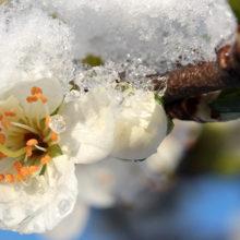 Синоптики встревожены: в Беларуси ожидаются заморозки