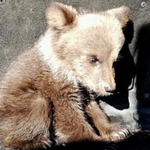 В лесу под Логойском нашли медвежонка-потеряшку