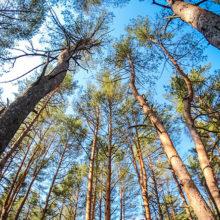 Все леса Гомельской области снабдят видеонаблюдением