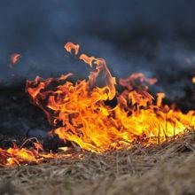 За сутки на Гомельщине произошли 9 пожаров в экосистемах