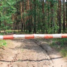 Некоторые леса до конца месяца могут закрыть для посещения