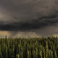 Погода в Гомеле в выходные дни 11-12 мая