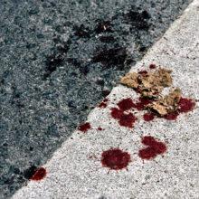 В Светлогорске «бесправный» водитель взял попутчика и совершил ДТП, пассажир погиб