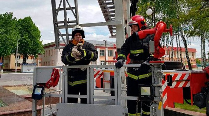 спасатели помогли совятам